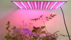 LED-Lamps-to-Boost-Plant-Growth
