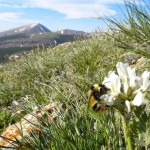 Climate Change Limiting Bees' Food Supply