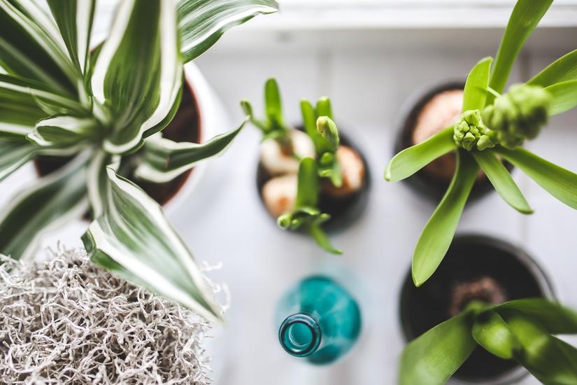 plants-large