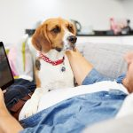 Talking with Your Dog: Wearable Gadgets That Help Pets Communicate with Their Owners