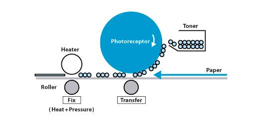 photoreceptor-2