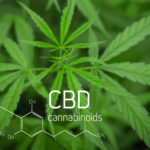 The Best 5 Methods to Consume CBD