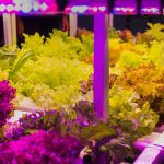 Why a Timer Is Important for Your LED Grow Lights