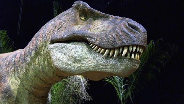 Dinosaur, Trex, T-Rex, Tyrannosaurus Rex, Dino, Reptile
