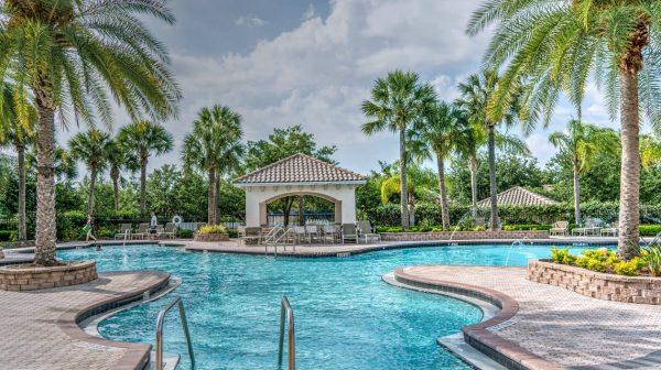 Palm Tree Planted Near Pool