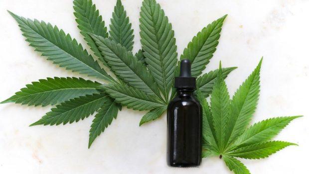 Image result for cannabis stocks unsplash