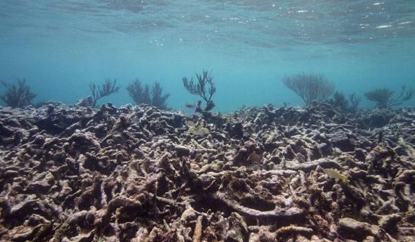 Ocean Acidifications Weakens Coral Reefs