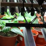 Key Facts About Blue Light to Keep in Mind in Your Grow House