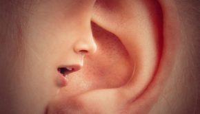 Ear, Mouth, Nose, Face, Head, Voices, Talk, Whisper