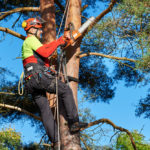 Why would you hire an Arborist?