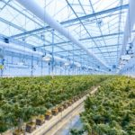 """Is The Cannabis Industry As """"Green"""" As People Think?"""