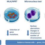 What Is Genotoxicity Screening?