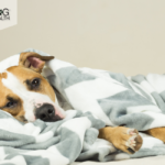How to Use CBD to Treat Tracheal Collapse in Dogs?